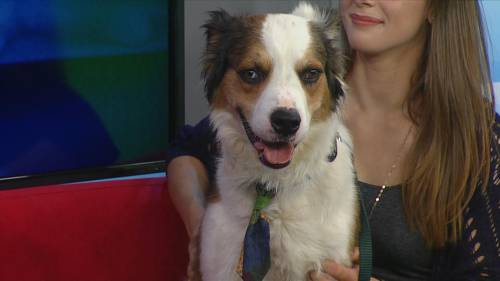 Saskatoon SPCA needs a home for Sid