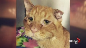 Meet BenBen the 'saddest cat in the world'