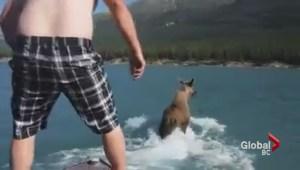 Wildlife harassment caught on video?