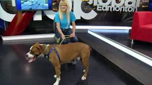 Edmonton Humane Society introduces Global viewers to Kingston
