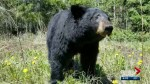 Bear warning issued for Wyndham-Carseland Provincial Park east of Calgary