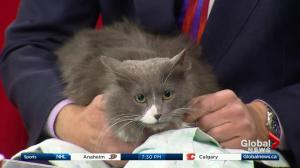 Edmonton Humane Society: Champ & Holiday
