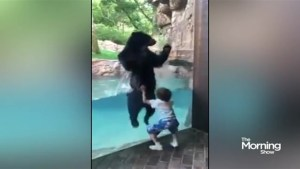 A boy and bear leap for joy