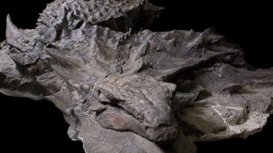 World's best-preserved dinosaur fossil named after Alberta man