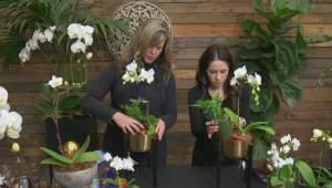 GardenWorks: orchids
