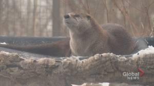 Otter dies at Calgary Zoo