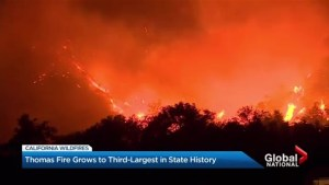 California's Thomas wildfire grows to third largest in state history
