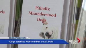 Court grants SPCA injunction request (02:02)