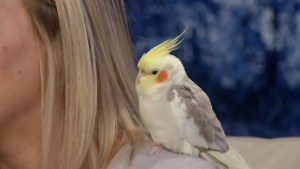 Humane Society of Kingston brings a feathery friend on the Morning Show