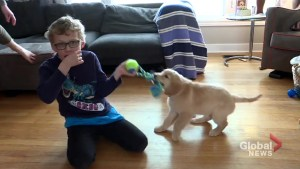 Boy with autism in Halifax given a different service dog
