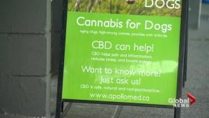 Veterinarians warn about marijuana for dogs