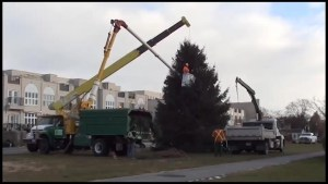 Cobourg family donates 45-foot tree to town to become the Christmas Magic centrepiece