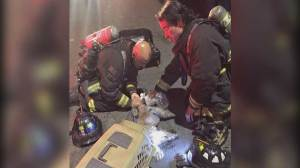 Caught on camera: Firefighters revive dog pulled from house fire