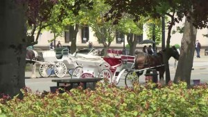 An old-fashioned mode of transportation sparks debate at Victoria city hall