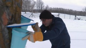 Producing your own maple syrup becoming a popular hobby