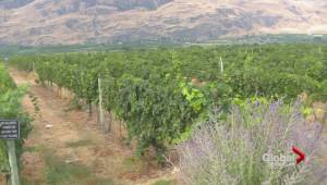 Peller deal highlights heightened investor interest in Okanagan wine industry (01:36)
