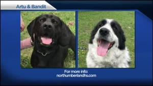 Shelter Pet Project – Artu and Bandit