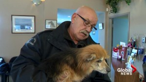 Many animal welfare workers suffer from compassion fatigue: Humane Canada