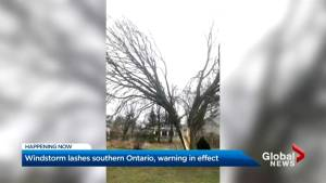Wild, windy weather causes havoc across GTA