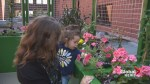 Moncton Hospital's rooftop garden set to help those with mental health problems