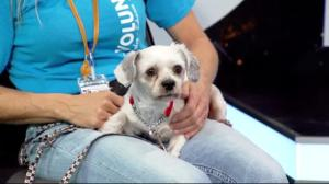 Edmonton Humane Society: Kenjamin & Gertrude