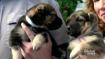 Puppies abandoned in freezing Calgary parking lot, humane society investigating