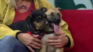 Heaven Can Wait introduces two adorable puppies