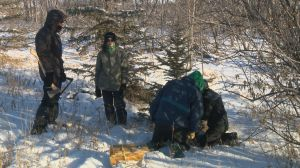 Nature Conservancy of Canada holds a Christmas tree harvest
