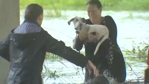 Thousands of pets and livestock saved after Hurricane Harvey