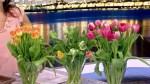 Tulips 101