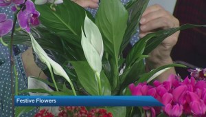 How to select a Christmas cactus and other holiday plants
