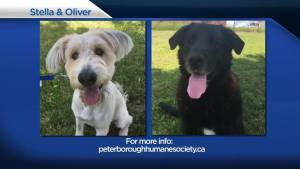 Global Peterborough's Shelter Pet Project – Stella and Oliver