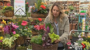 Gardening Tips: Mother's Day perennial arrangements