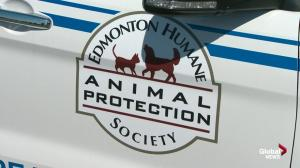 Edmonton Humane Society cites safety concerns in ending enforcement