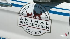 Edmonton Humane Society cites safety concerns in ending enforcement