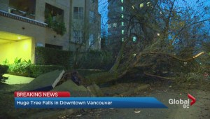 Huge tree comes crashing down in Vancouver's West End