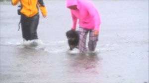 Hurricane Florence: Reporter rescues dog from flood waters