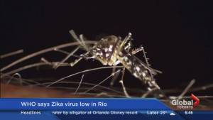 How the Canadian Olympic Committee is responding to the Zika virus