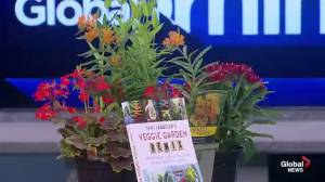 Gardening tips with Niki Jabbour