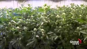 Marijuana education session at Calgary city council Monday
