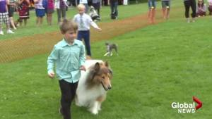 Hundreds of dogs come to Lavington Community Park
