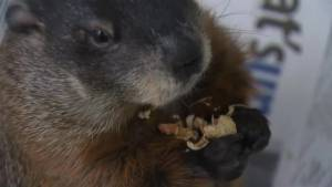 Weather anchor looks for answers about Groundhog Day