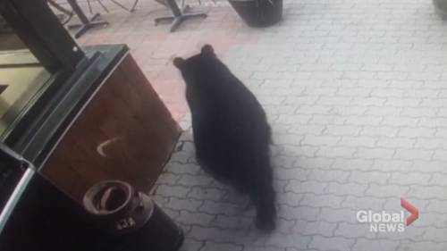 Bear shocks tourists after wandering into Canmore restaurant