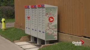 'We contacted Canada Post 3 times': Calgary man trying to move mailbox to paint fence