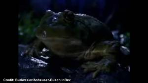 """Super Bowl classic commercial:  Budweiser """"Frogs"""""""