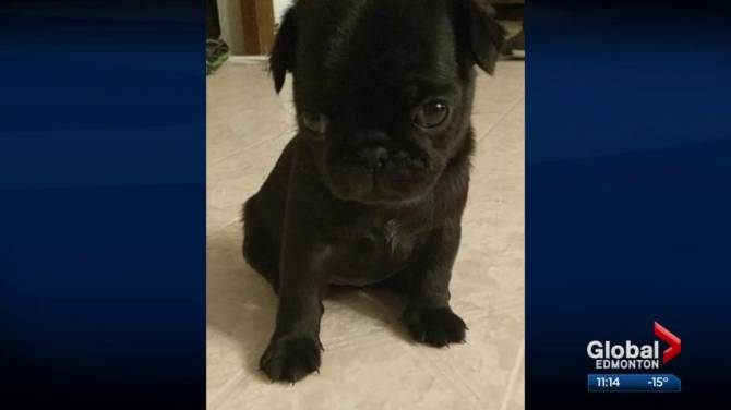 Alberta families warn about purchasing puppy from breeder