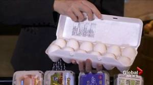 Nutrition: Sorting through the confusion of different types of eggs