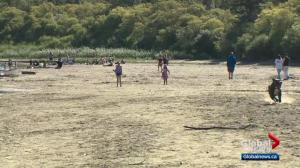 Future of Accidental Beach could hinge on Edmontonians' behaviour