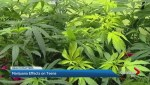 Effects of marijuana on teen brains