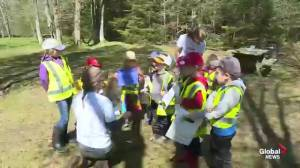 Land-based learning the focus at forest school